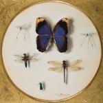pabloE-oleo-insectos07