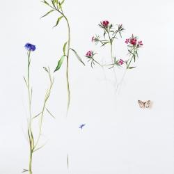 Flor azul_Pablo_Echevarria