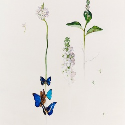 botanica01_Pablo_Echevarria